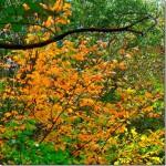 山の中には、季節柄・・・紅葉が見られた。