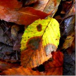 落ち葉を拾い撮りしながら歩く…