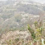 ⑥衣張山からの眺望
