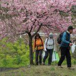 清掃4班横野村落花の木の下