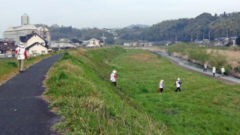 愛媛県南宇和郡愛南町 僧都川(ソウズガワ)の土手と河原を歩く