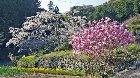 春の花が満開