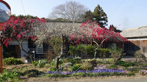 民家の庭も色とりどりの花々
