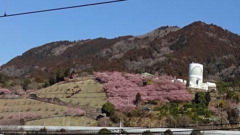 松田駅から松田山を望む