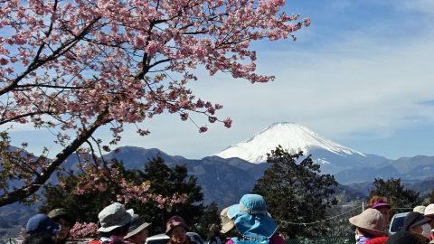 松田山西平畑公園からの富士山