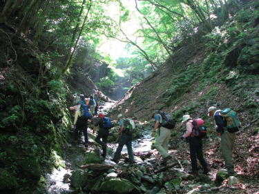 西丹沢檜洞丸へ沢筋より登るー緑が眩しい