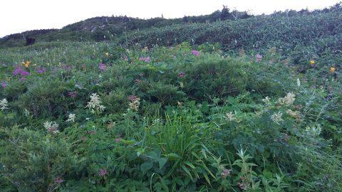 0南竜道の花畑