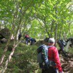 森林の中を登る