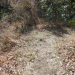 茅塚から南下する道が右に折れ曲がるところで藪に入ります。