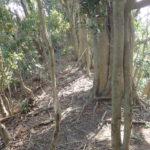 藪を抜けると、開けて、分かりやすい尾根に出ました。