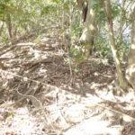 写真では表現できていませんが、かなりの急斜面です。ほとんど四つん這いになって三点支持で登ります。写真、露出した根っこのように見えるのは、散乱した木の枯れ枝です。
