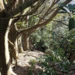 何やら、南尾根の高塚(どんぐり並木)に似た景色です。