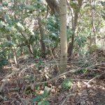 このまま茅塚まで戻って昼食。当初畠山方面から下る藪もこなすつもりでしたが、疲れたので引き返すことに。