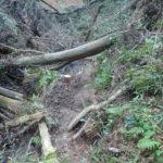 森戸川林道の中ほどから、森戸川を渡渉して、三峰沢沿いの岸道に入って少し行ったところです。倒木がかなり整理されて歩き易くなりました。写真ではかなり酷い状況に見えますが、そんなことはありません。