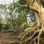 1. 観音塚。馬頭観音と千手観音が祀られています。手前タブの巨木がここのシンボル。立派です。