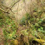 14. ワイルドな雰囲気です。沢は倒木で埋め尽くされていますが、登山道の木はほとんど全て切り払われており、歩行の邪魔になる倒木は殆どありません。