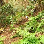 20. 右の斜面(ほとんど崖)をロープを頼りに登ると、丸塚尾根(破線ルート)です。今は遣り過ごします。