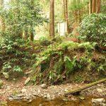 23. 飛び石伝いに川を渉ると正面が森戸川林道の広場です。