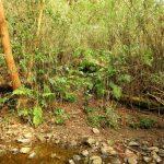 25. 川を渉り、この藪の切れ目から入ります。