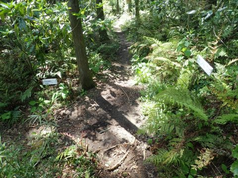 T字分岐から林道方向を振り返って撮った写真。このT字分岐を写真左方向に入ります。コーナー足元に道案内があります。