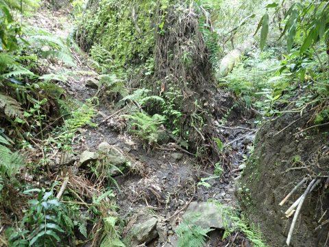 正面は倒木の返った根っこです。左に巻いた気配がありますが、すぐ行き止まりです。右の沢を行きます。