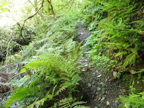 完全に沢から離脱して、中尾根の支尾根東斜面をトラバースして登って行きます。