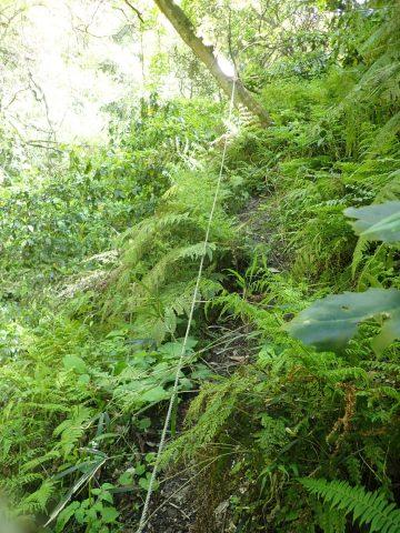 傾斜は急になってきます。左は切れ落ちた谷。転落防止のロープが張ってあります。