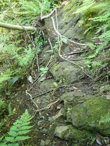 その先には滑りやすい岩。ここもロープ頼りです。