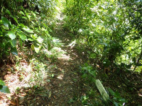 六杷峠の十字路は非常に分かり難い。ここで首をひねっている人によく出合います。足もとの白い道案内に従って南沢に下ります。