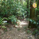 1. 田浦方面中尾根辻の峰方面の分岐。杉の樹には「なかさわ11」の消防標識と。。。