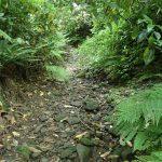 8. 沢を歩きます。今は水が涸れていますが、時に流れていることもあります。