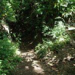 21. 辻の峰に出ました。今来たところを振り返って撮った写真です。右は中尾根を通って乳頭山方面。