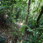 16. 笹薮を抜けるとこんな山道です。