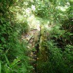 1. 南尾根の六杷峠分岐から東方向(源流方向)に向かい、登山道の路肩崩落個所に置かれた倒木を過ぎて少し行くと。。。