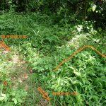 2. 道の右側草叢に踏み跡があります。ここから入り。。。2. 道の右側草叢に踏み跡があります。ここから入り。。。