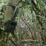 24. 周りは笹薮に替わりました。この計器は多分イノシシ監視用でしょう。