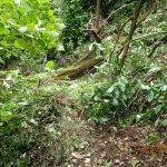 17f 辻の峰から下りてきた場合は、この倒木を越えて行くと沢に合流する。