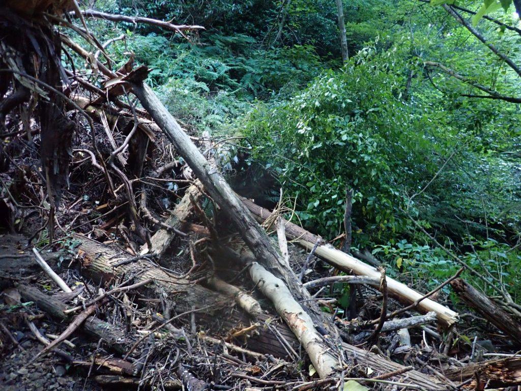 撮影ポイント14,15の中間点。支沢から大量の倒木が流れ落ち、通路を塞いでいる。